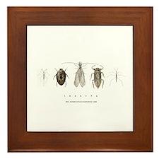 Insecta Framed Tile