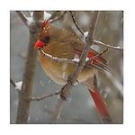 Female Cardinal Tile Coaster