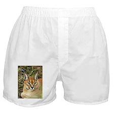 Caracal Lynx Boxer Shorts