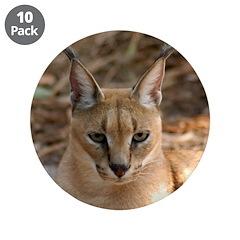 Caracal Lynx 3.5
