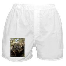 Bearcat Boxer Shorts