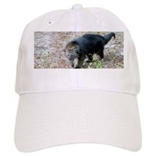 Bearcat Baseball Cap