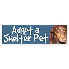 Adopt a Shelter Pet bumper sticker - doberman