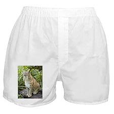 Bobcat Boxer Shorts