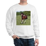 Pinto Foxtrotter Sweatshirt