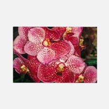Orchid Flower Photo Rectangle Magnet