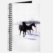 Unique Rocky mountain horse Journal