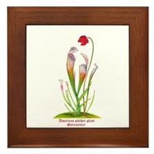 American Pitcher Plant Framed Tile