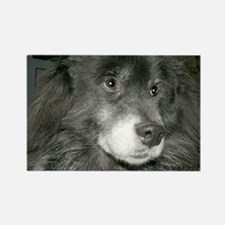 Black Chow Mix Rectangle Magnet