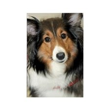 Shetland Sheepdog/Sheltie Rectangle Magnet