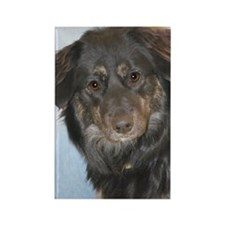 Australian Shepherd Mix Photo Rectangle Magnet