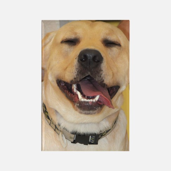 Yellow Lab Photo Rectangle Magnet
