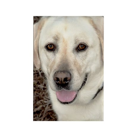 White Labrador Rectangle Magnet