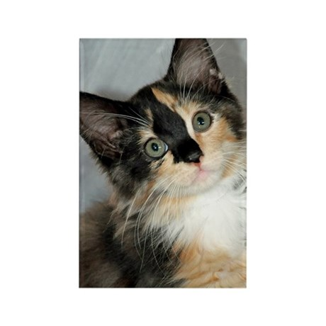 Calico Cats & Kittens Rectangle Magnet (10 pack)