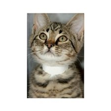 Tabby Kitten Rectangle Magnet