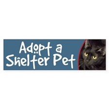 Adopt-Black Cats & Kittens Bumper Stickers