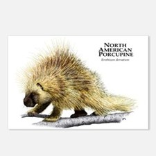 North American Porcupine Postcards (Package of 8)