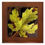 Maple Leaf Framed Tile