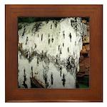 Birch Tree Framed Tile