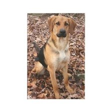 Black Mouth Cur Photo Rectangle Magnet