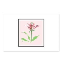 Botanical Illustration Pink Postcards (Package of