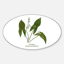 Arrowhead Plant Sticker (Oval)