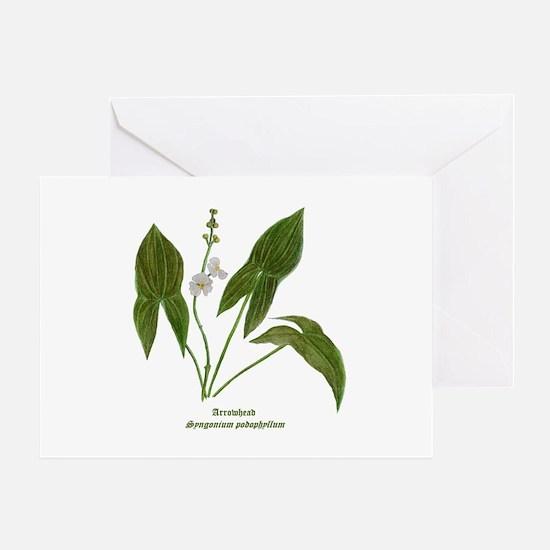 Arrowhead Plant Greeting Card