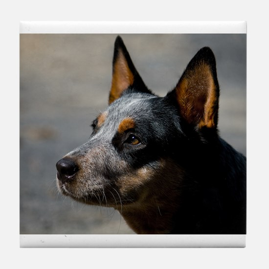 Cute Acd rescue Tile Coaster