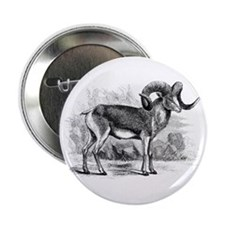 "Bighorn Sheep 2.25"" Button"