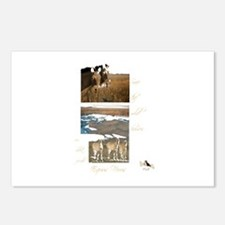 Save the Wild Horses Postcards (Package of 8)