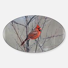 Male Cardinal Decal