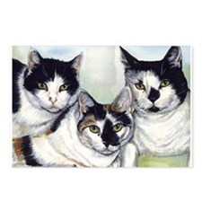 Cute White cat Postcards (Package of 8)