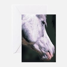 Arabian Horse-Chas Greeting Cards (Pk of 10)