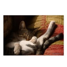 """Funny Kitten Sleeping"" Postcards (Package of 8)"