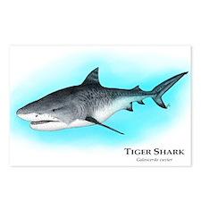 Tiger Shark Postcards (Package of 8)