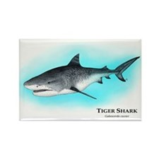 Tiger Shark Rectangle Magnet