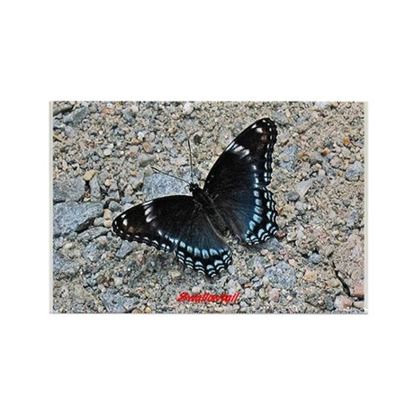 BLUE SWALLOWTAIL Rectangle Magnet (100 pack)
