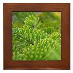 Acadia N.P. Pine Framed Tile