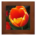 Spring Tulip Framed Tile
