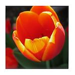 Spring Tulip Tile Coaster