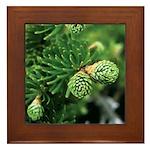 Spring New Hampshire Pine Framed Tile