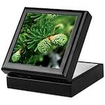 Spring New Hampshire Pine Keepsake Box