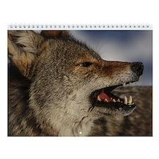 Coyote Wall Calendar