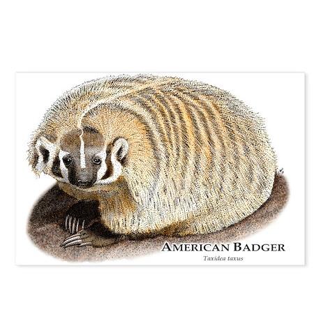 American Badger Postcards (Package of 8)