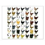 49 Hen Breeds Small Poster