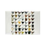 49 Hen Breeds Rectangle Magnet (100 pack)