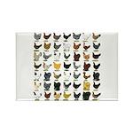 49 Hen Breeds Rectangle Magnet (10 pack)