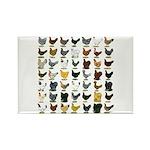 49 Hen Breeds Rectangle Magnet