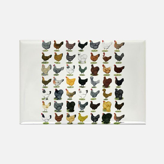 49 Hen Breeds Rectangle Magnet