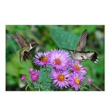 Hummingbird and asters Postcards (Package of 8)